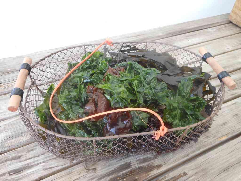 Sorties algues et repas: 2018 un bon cru!
